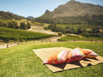 Fine Cape Wine vineyards