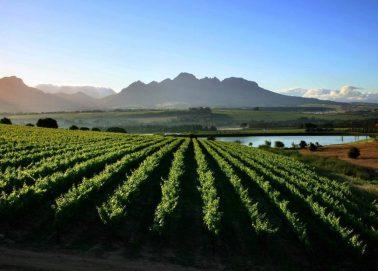 Fine Cape Wine