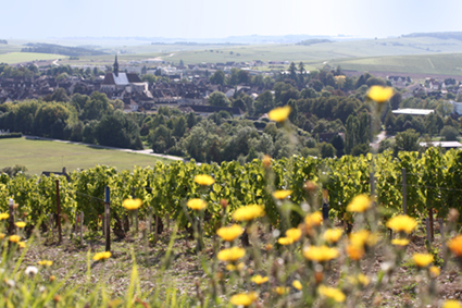 Maison Lamblin Vineyard